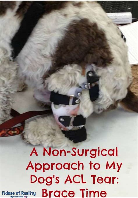 A Non-Surgical Approach to My Dog's ACL Tear: Brace Time