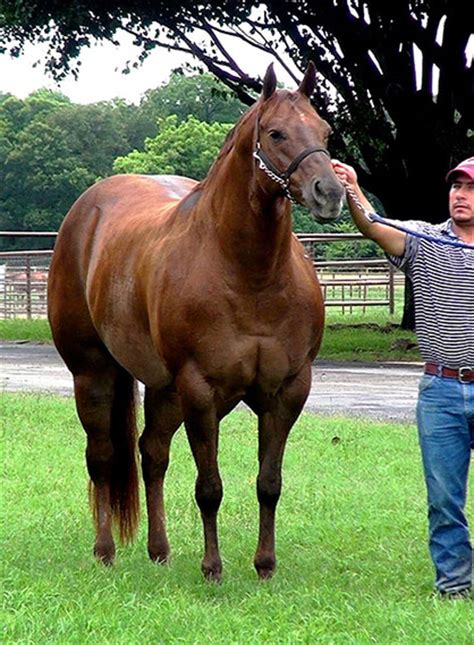 Top Halter Horse Broodmares and Prospects Available in Pro