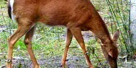 Chronic Wasting Disease suspected in second Mississippi