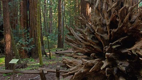 Armstrong Redwoods State Natural Reserve   SonomaCounty